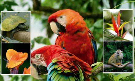 Alcaldía de Medellín y Corantioquia reiteran llamado a proteger la fauna