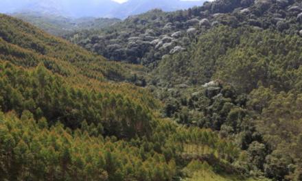En el Día Mundial de la Tierra, Smurfit Kappa Colombia reafirma compromiso con la sostenibilidad