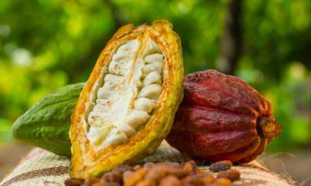 Cacao colombiano busca abrir nuevas oportunidades comerciales en la región Measa