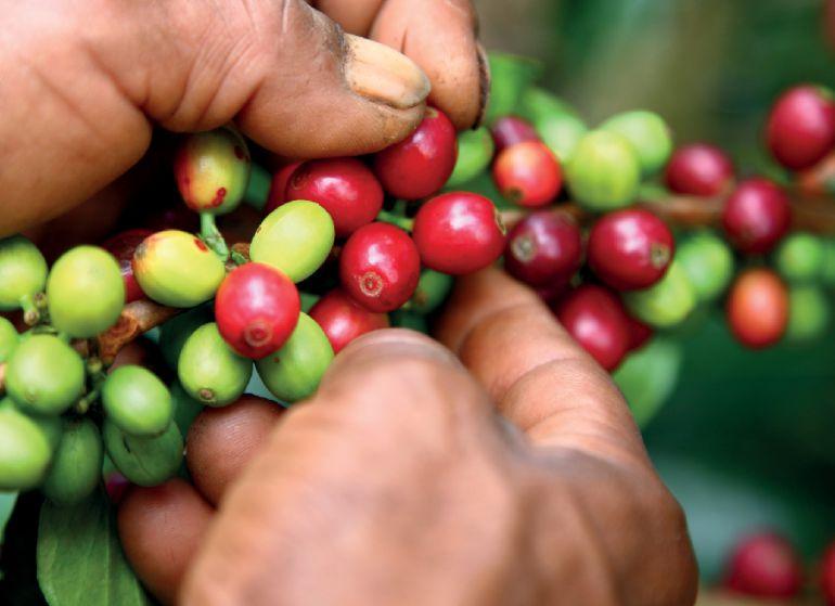 Abiertas convocatorias en Antioquia para participar en el programa Café Región