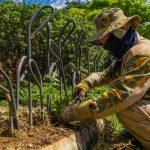 Ciudad verde: Más de 3.300 árboles han sido sembrados durante este año en Medellín